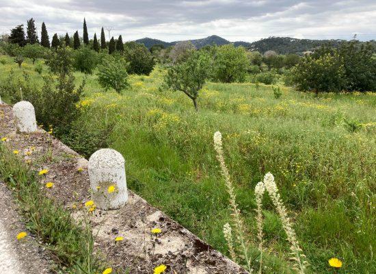 mallorca-kloster-wiese